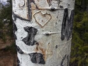 aspen heart
