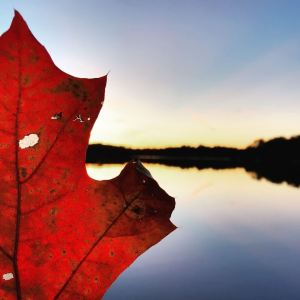Erica Loloff Poetry Fall Leaf at Lake image